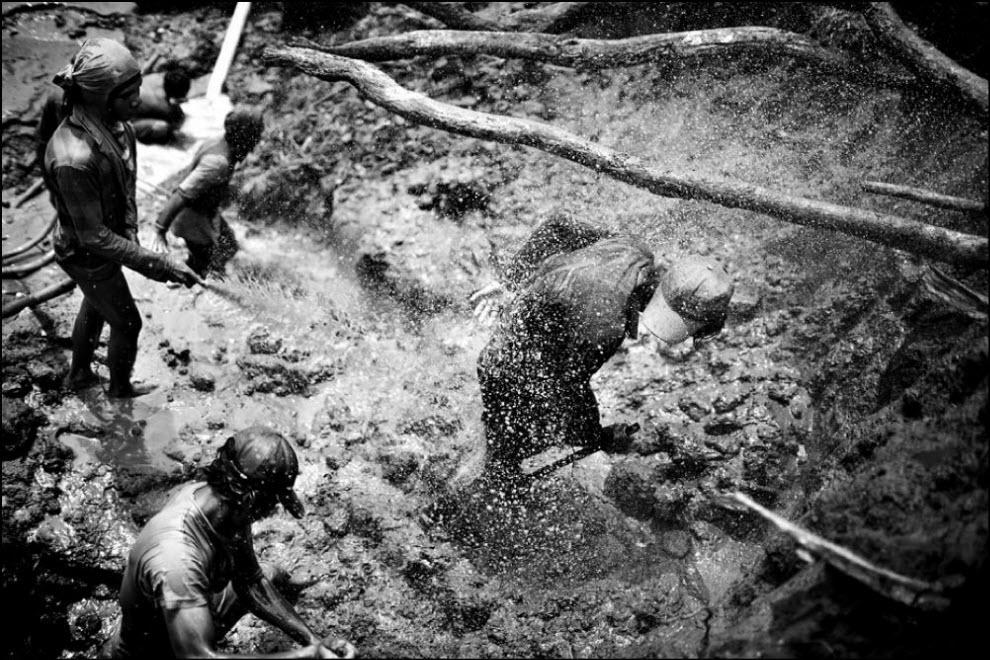 03) Корни умирающего дерева.