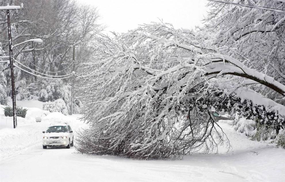 3. Автомобиль медленно проезжает мимо двух сломанных сильным ветром деревьев в Александрии, штат Вирджиния 6 февраля. (Cliff Owen / AP)