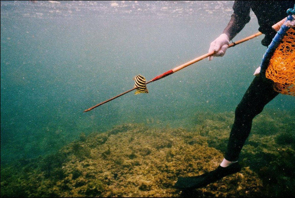 6) Хэнё показывает свою добычу - наколотую на гарпун рыбу.