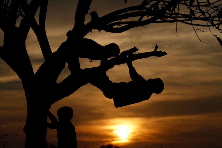 7. Силуэты детей на дереве в Аллахабаде. (AP Photo/Rajesh Kumar Singh)