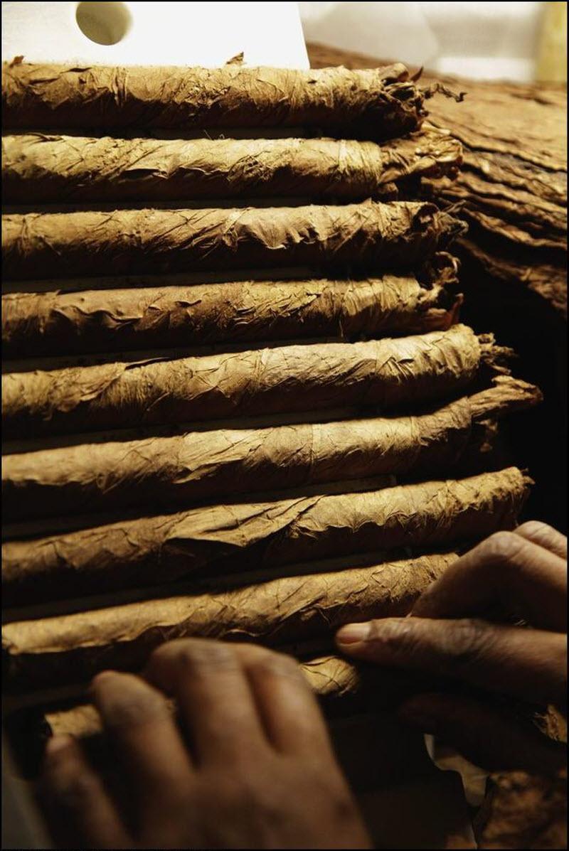 07) Все сигары на Кубе имеют покровный лист Корохо, но специально для сигар формата Cohiba, отбирают самые тонкие листья. Также тщательно отбираются листья и для начинки сигар, которые проходят дополнительную, третью ферментацию, целью которой является удаление лишних смол и нитратов.