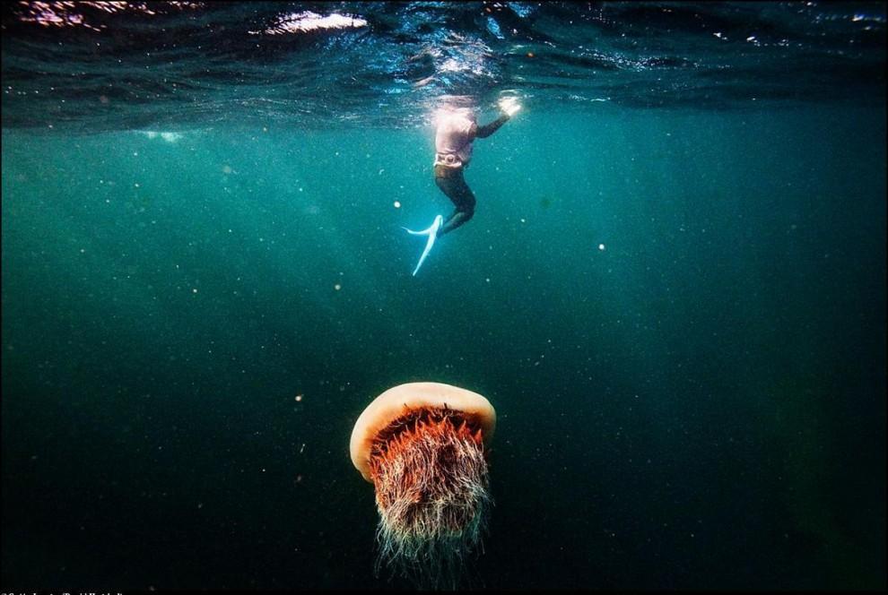 7) Хэнё и жалящая медуза.