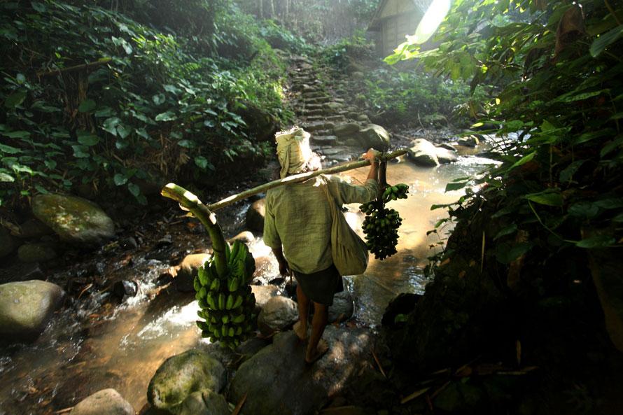 8. Член традиционного племени Бадуи несет бананы на продажу в деревне в холмистой местности в Бантене, Индонезия. (Photo by Ulet Ifansasti/Getty Images)
