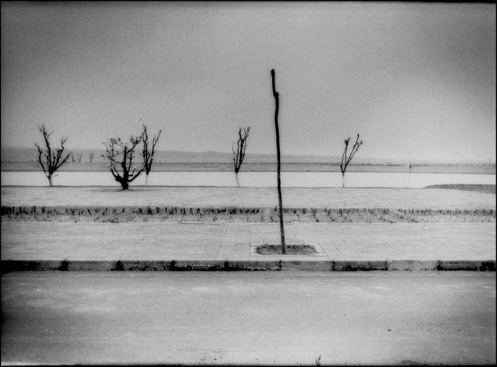 09) Деревья рядом с искусственным водоёмом во Внутренней Монголии, КНР, местные власти пытаются сдержать наступление пустыни Гоби.