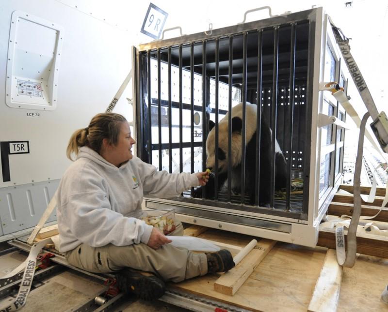 Прощание с пандами