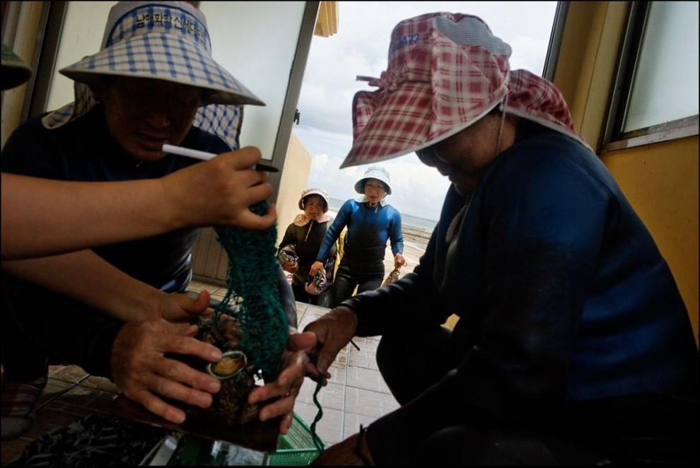 17) Идет сортировка. Одним из самых дорогих деликатесов, которые достают со дна моря является морское ушко.