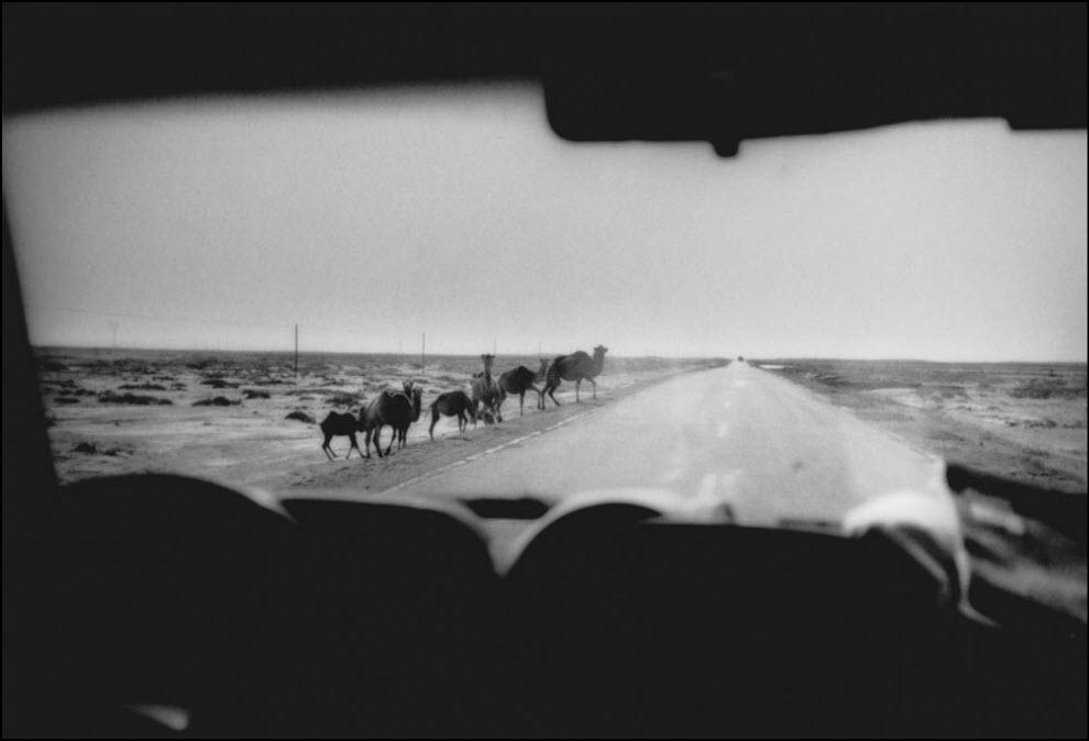 17) Пустыня Гоби, Внутренняя Монголия.