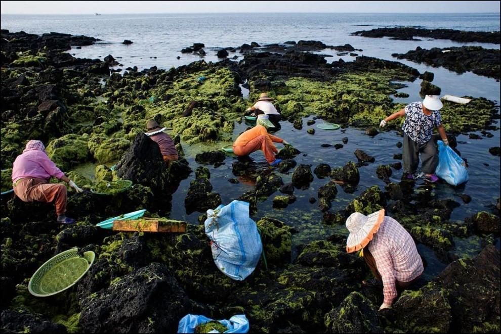 21) Иногда хэнё собирают добычу на берегу, которую выбросило бурное море накануне.