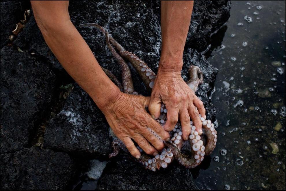 22) Вот так полощут осьминога.
