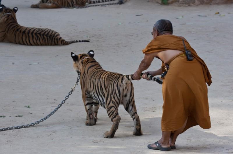 Китайский новый год тигра