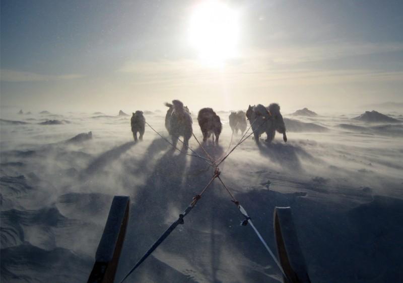 Собаки, снег, сани
