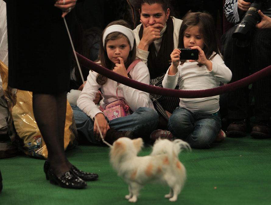 12) Беатрис Яррин (наверху) сидит со своими дочерьми 9-летней Изабель (слева) и 5-летней Моникой на выставке собак. Семья специально прилетела в Нью-Йорк на выставку. (Photo by Chris Hondros/Getty Images)