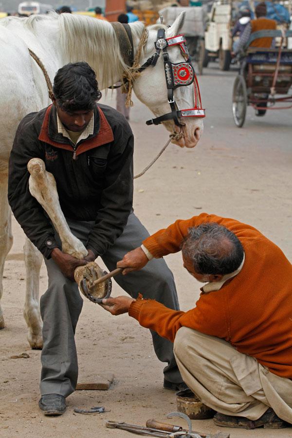 8) Владелец (слева) держит копыто своей лошади, пока кузнец прибивает к нему подкову в Нью-Дели. Раньше лошади были широко распространены в качестве транспорта, но сейчас в крупных городах их редко используют. (AP Photo/Rajesh Kumar Singh)