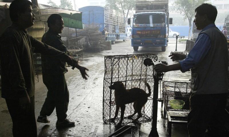 Собачья жизнь в Китае
