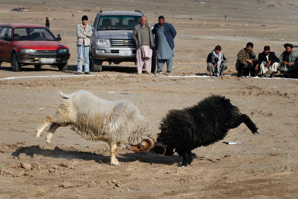 28. Толпа собралась посмотреть на любимое развлечение афганцев – стравливание животных – в Кабуле 19 февраля. (AP Photo/Musadeq Sadeq)