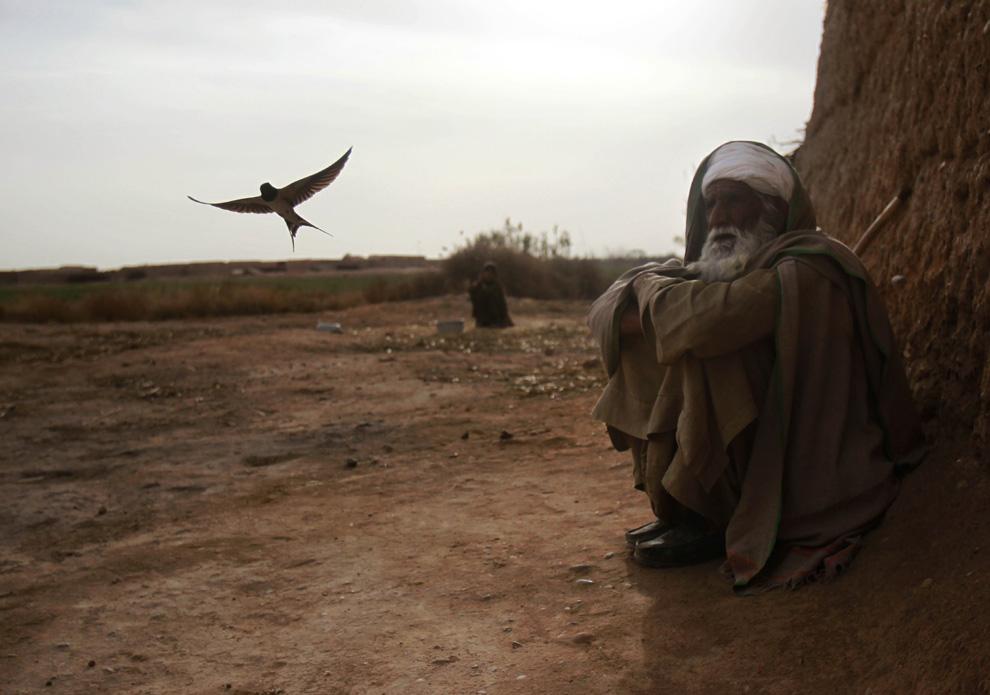 43. Птичка пролетает мимо пожилого афганца, сидящего у своего дома в Маржахе 25 февраля. (AP Photo/David Guttenfelder)