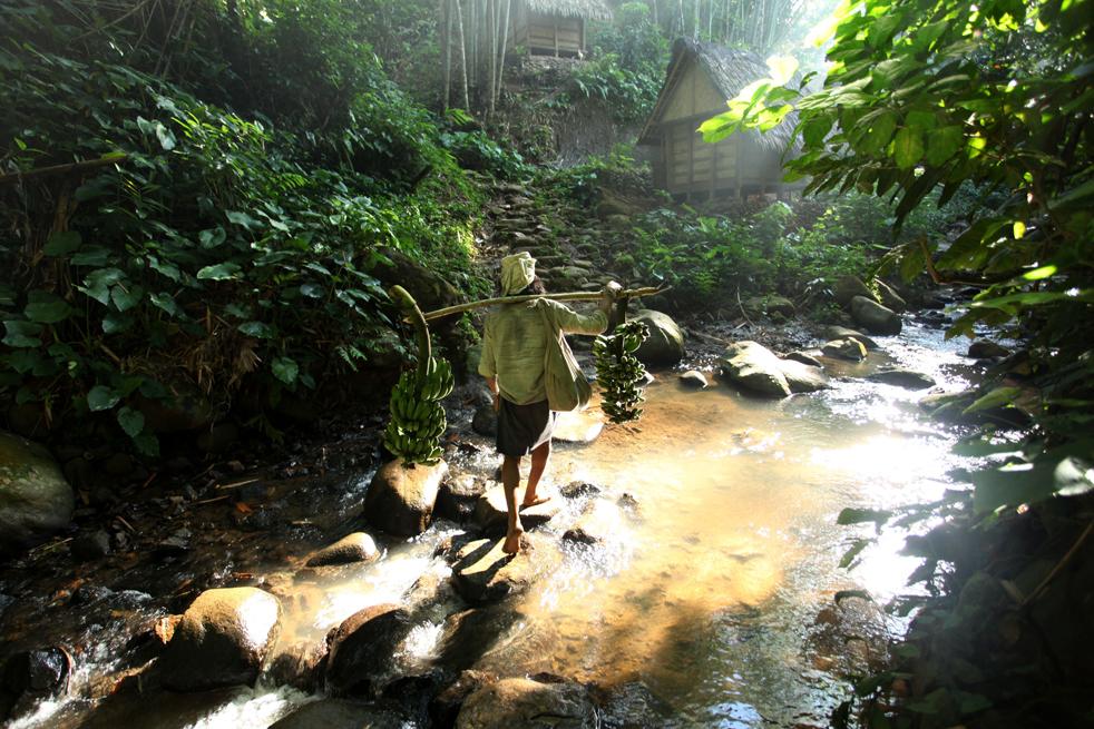 8. Представитель традиционного племени бадуй несет бананы на продажу в горах Кенденг в Бантене 7 февраля. (Getty Images / Ulet Ifansasti)