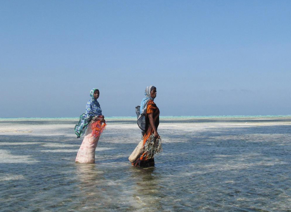 1. Мне захотелось запечатлеть отдаление людей, занимающихся морскими водорослями, которые иногда кажутся карликами по сравнению с морем и горизонтом. (Joanna Lipper)