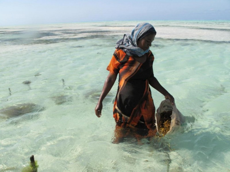 4. Морскими водорослями занимаются в основном женщины, живущие в сельских районах, это один из видов работ, за которую женщины получают наличные. (Joanna Lipper)