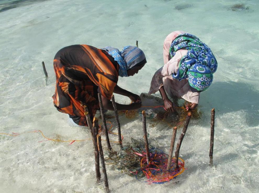 7. Прямой контакт рук сборщиков, воды и морских водорослей навевает воспоминания о многочисленных картинах женщин-рабочих на таких работах, как «Крохоборы» Жана-Франсуа Милле и «Two Peasant Women Digging» Винсента Ван Гога. (Joanna Lipper)