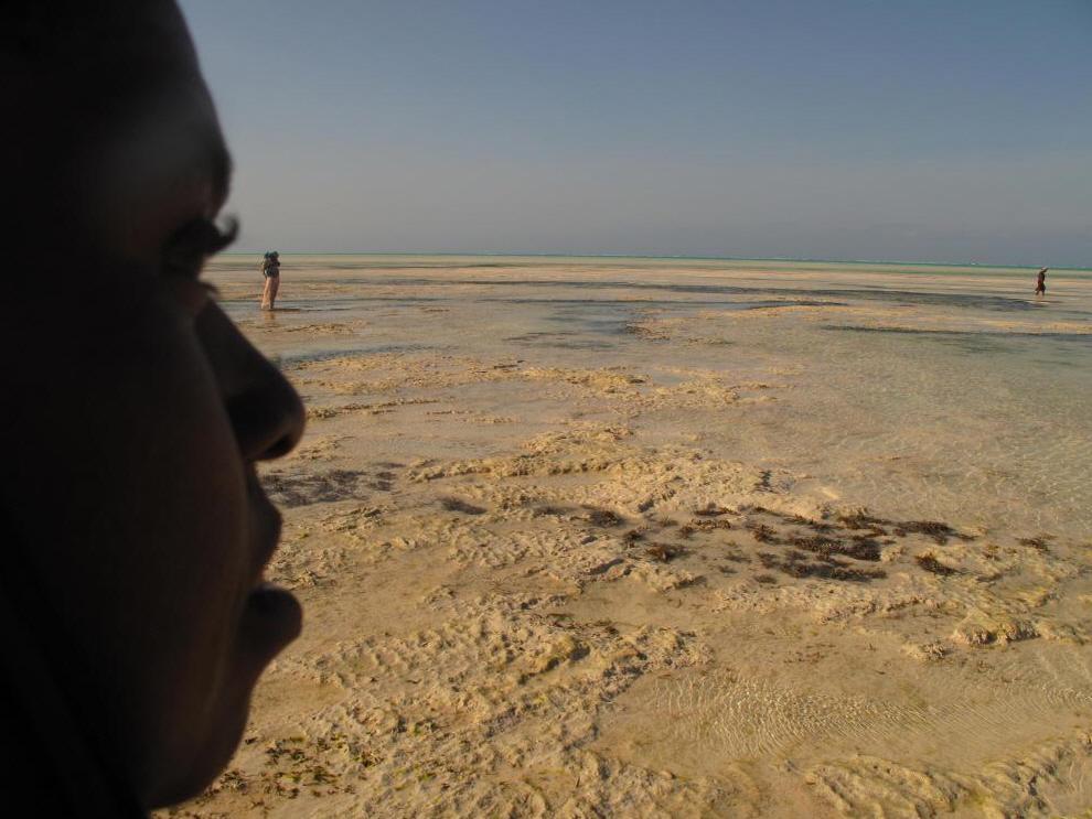 12. На мировом уровне импорт и экспорт водорослей составляет бизнес в 200 миллиардов долларов, только США импортируют их на 50 миллиардов каждый год. Один скупщик на Занзибаре заявляет, что платит сборщикам семь центов за килограмм водорослей. Согласно еще одному сообщению, сборщики Танзании, каждые два месяца получают около 500 долларов на семью. Это равно почти полугодовому заработку рыбаков. (Joanna Lipper)