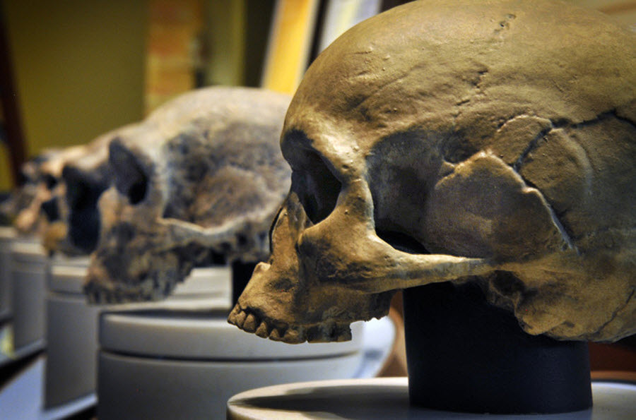 1068 Выставка Происхождение человека