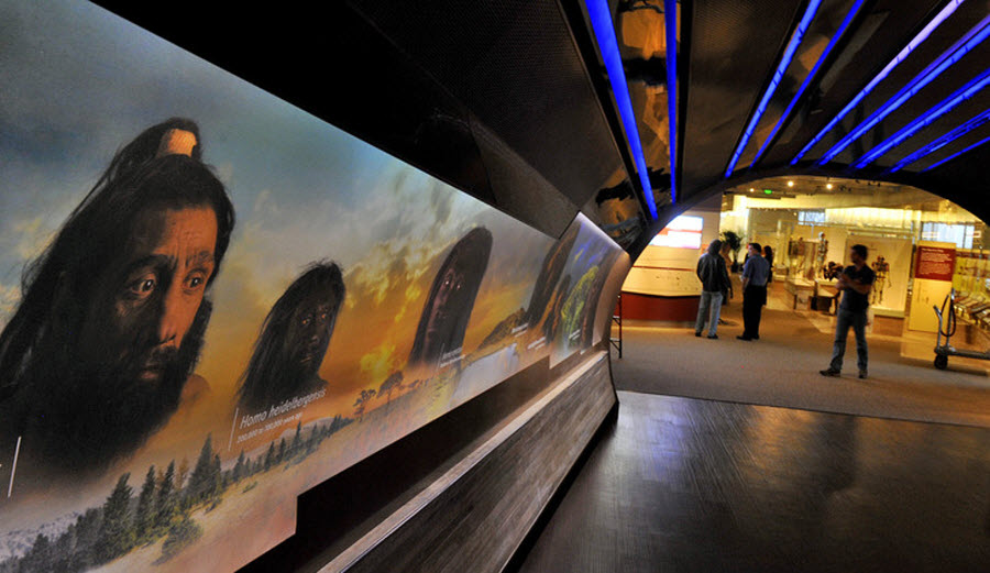 1182 Выставка Происхождение человека