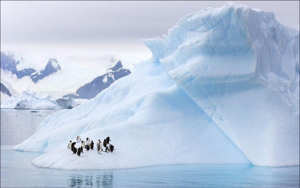 365 Гигантские ледяные скульптуры