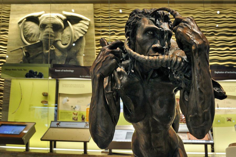 454 Выставка Происхождение человека