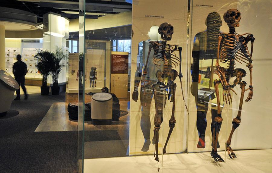 736 Выставка Происхождение человека