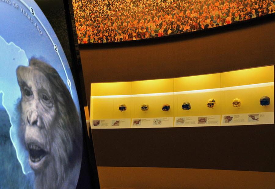 935 Выставка Происхождение человека