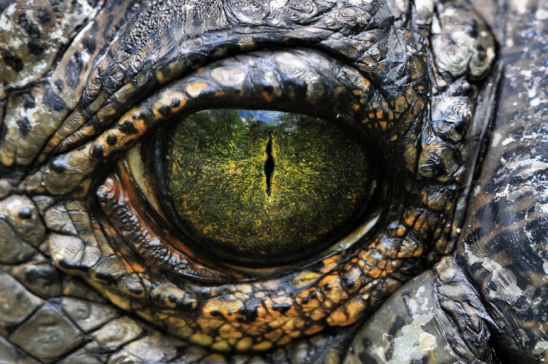 images28 800x532 Глаза   зеркало души