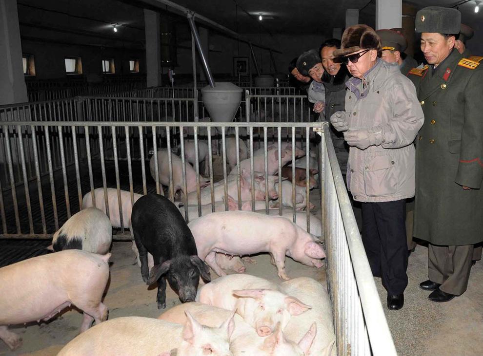 Черная свинья Ким Чен Ира