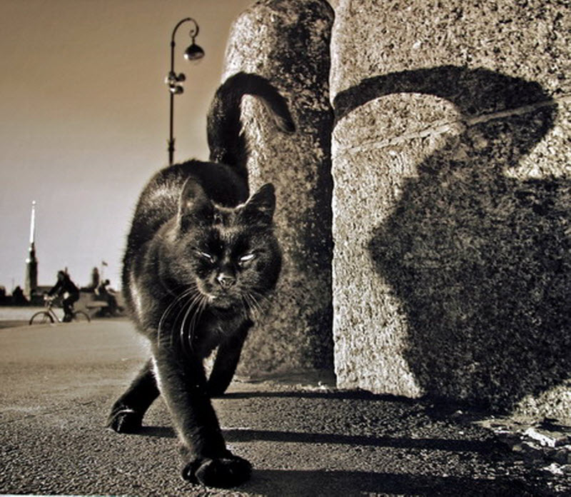 567 Петербург глазами фотографа Александра Петросяна