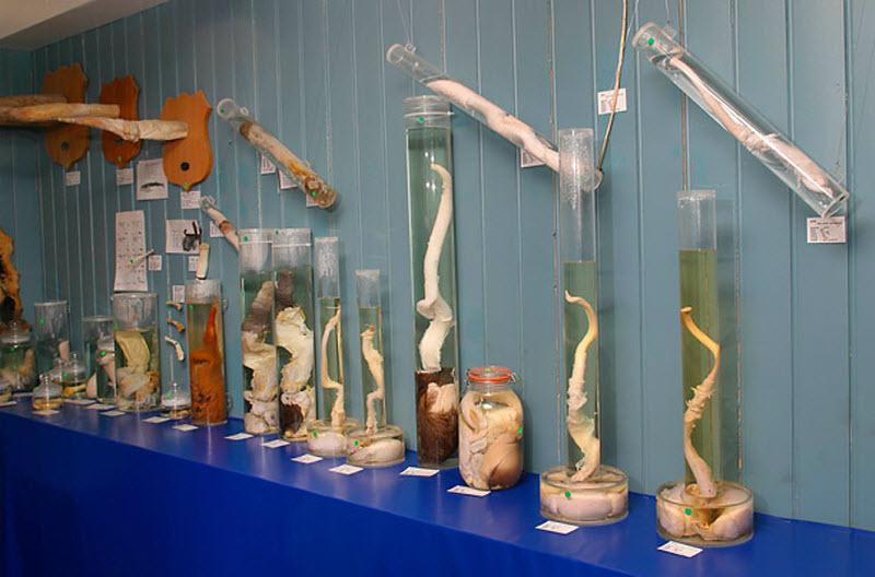 Странные музеи мира