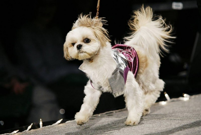 Неделя собачьей моды