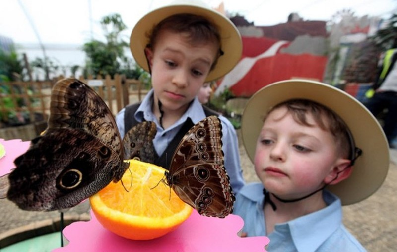 images7 800x507 Выставка бабочек