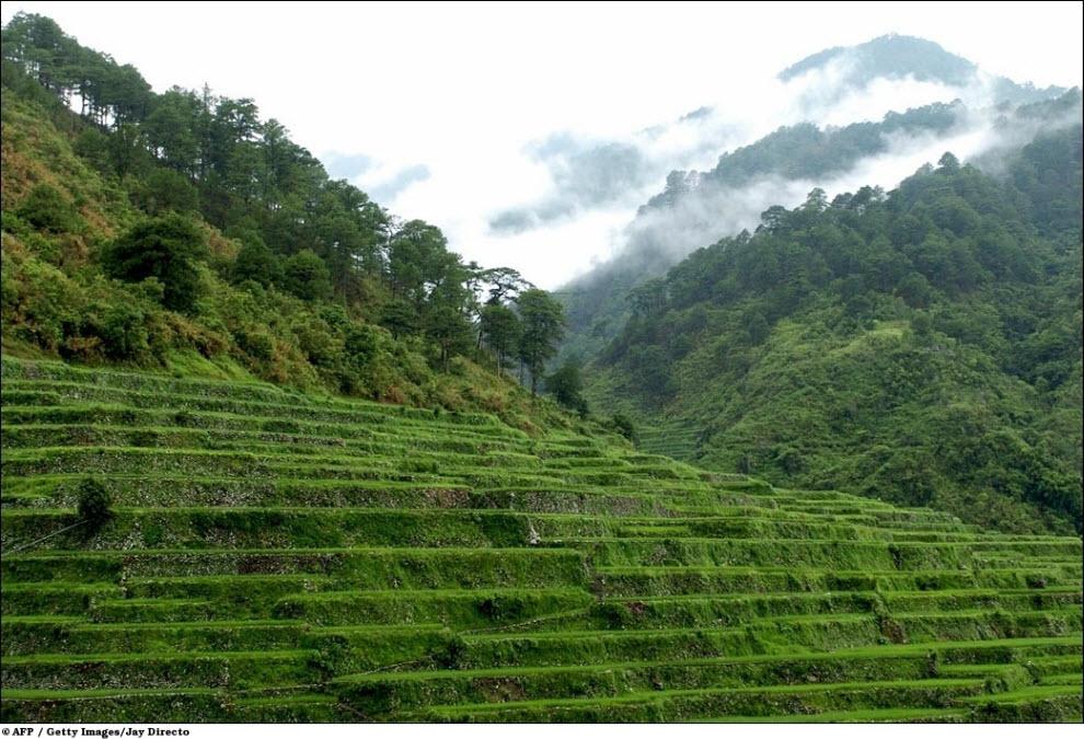 103 Vanishing hutan