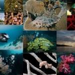 Волшебный мир архипелага Раджа Ампат