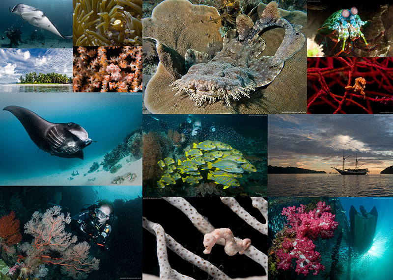 1100 Волшебный мир архипелага Раджа Ампат