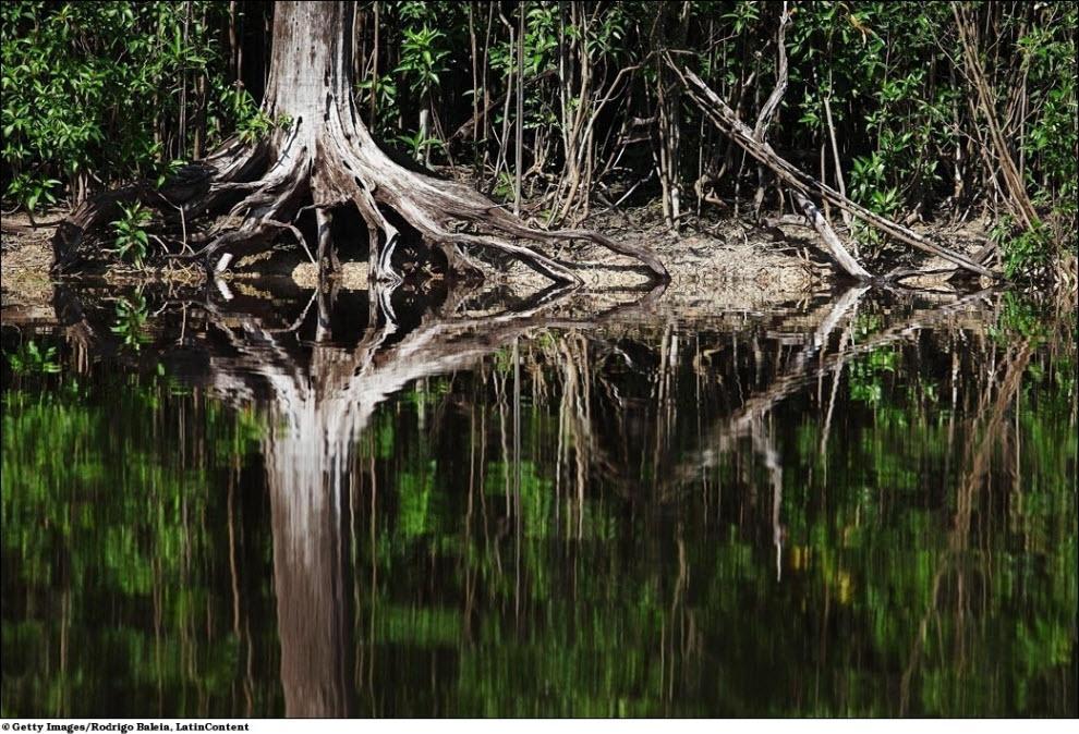 112 Vanishing hutan