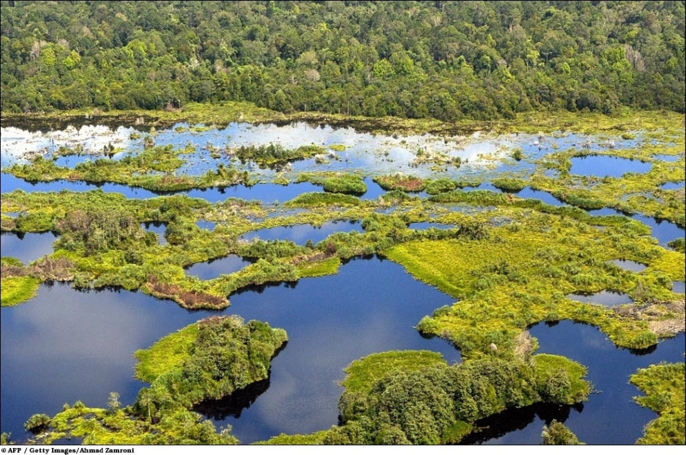 113 Vanishing hutan