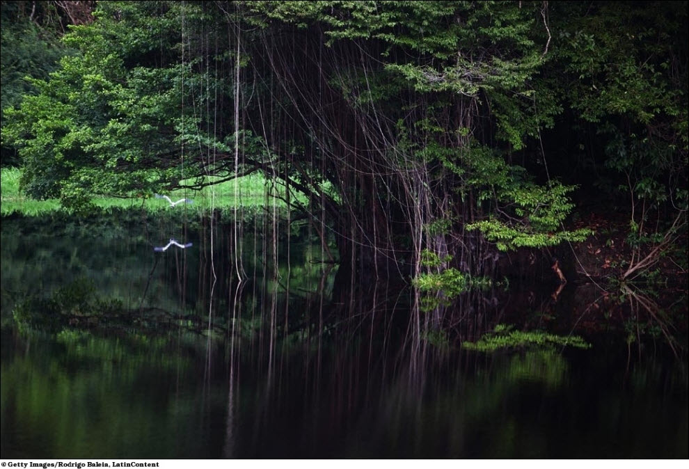 122 Vanishing hutan