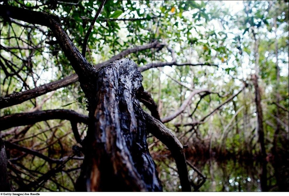 152 Vanishing hutan