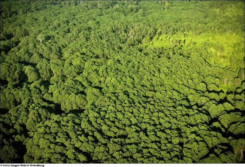 161 Vanishing hutan