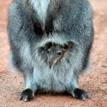 День Матери в мире животных