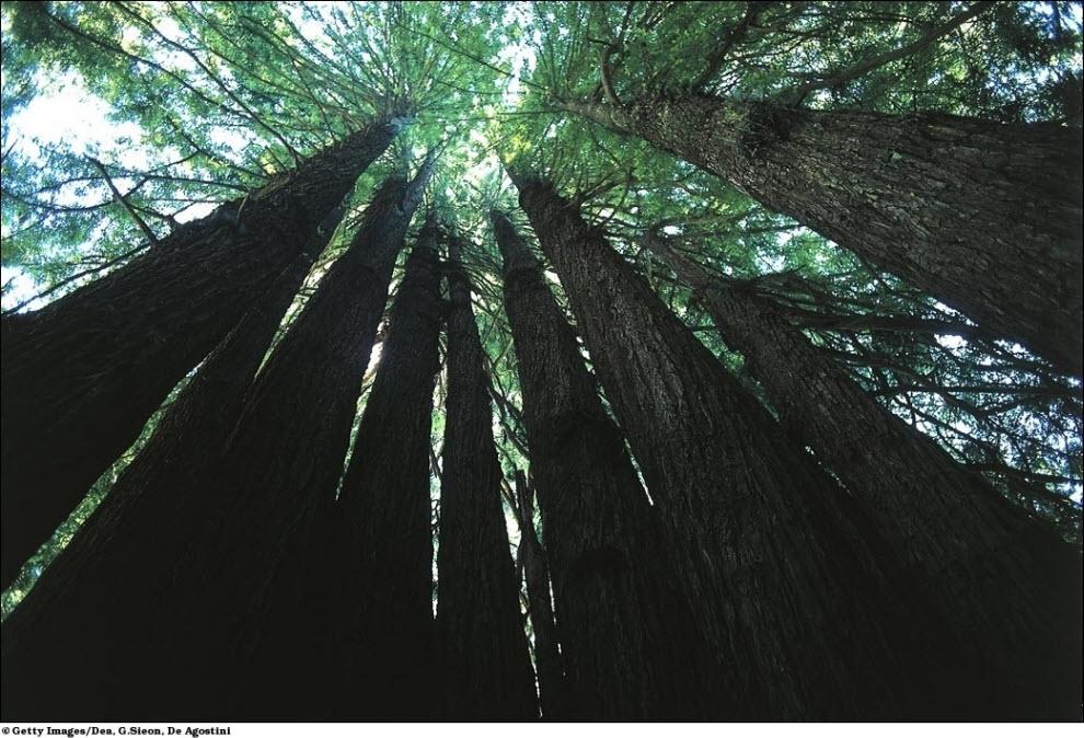 42 Vanishing hutan