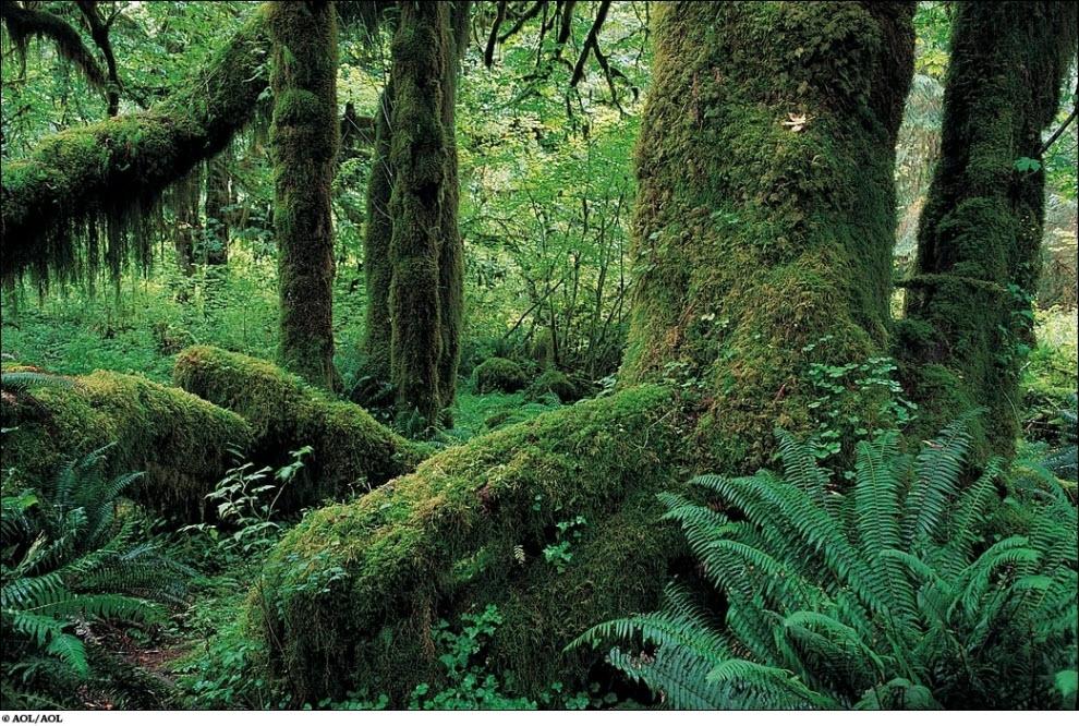 62 Vanishing hutan