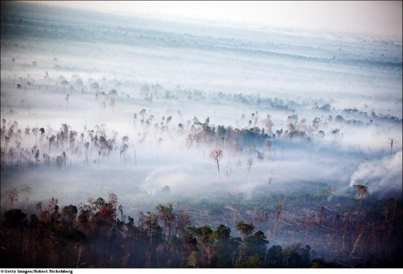 Исчезающие леса