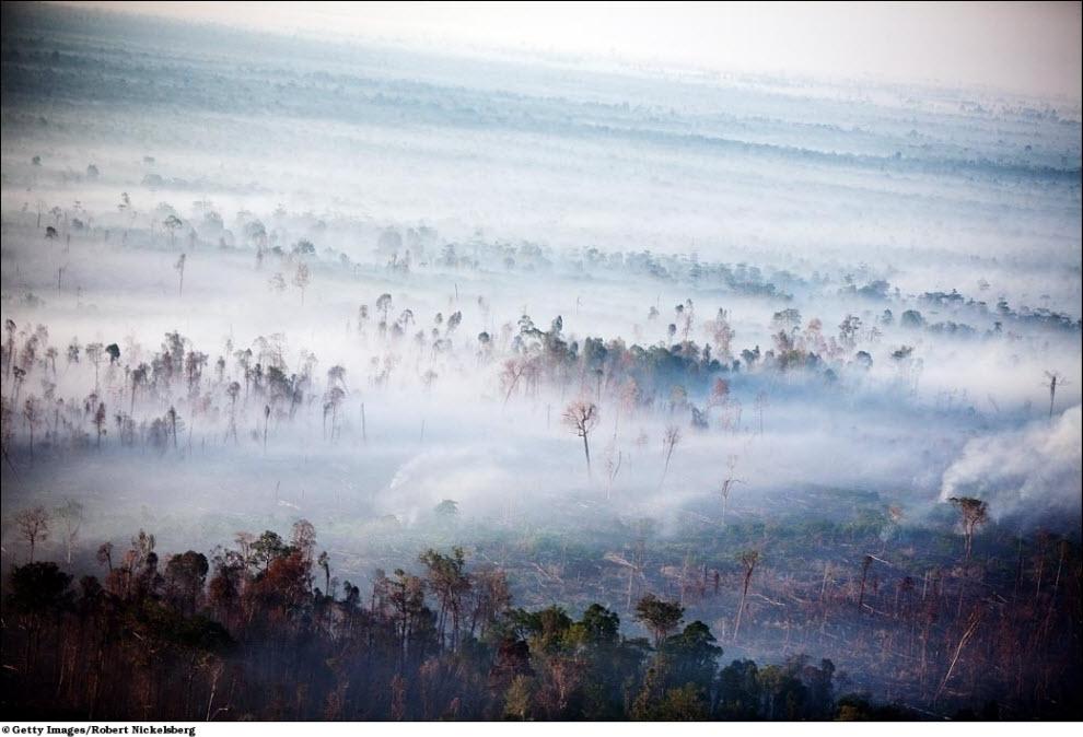 72 Vanishing hutan